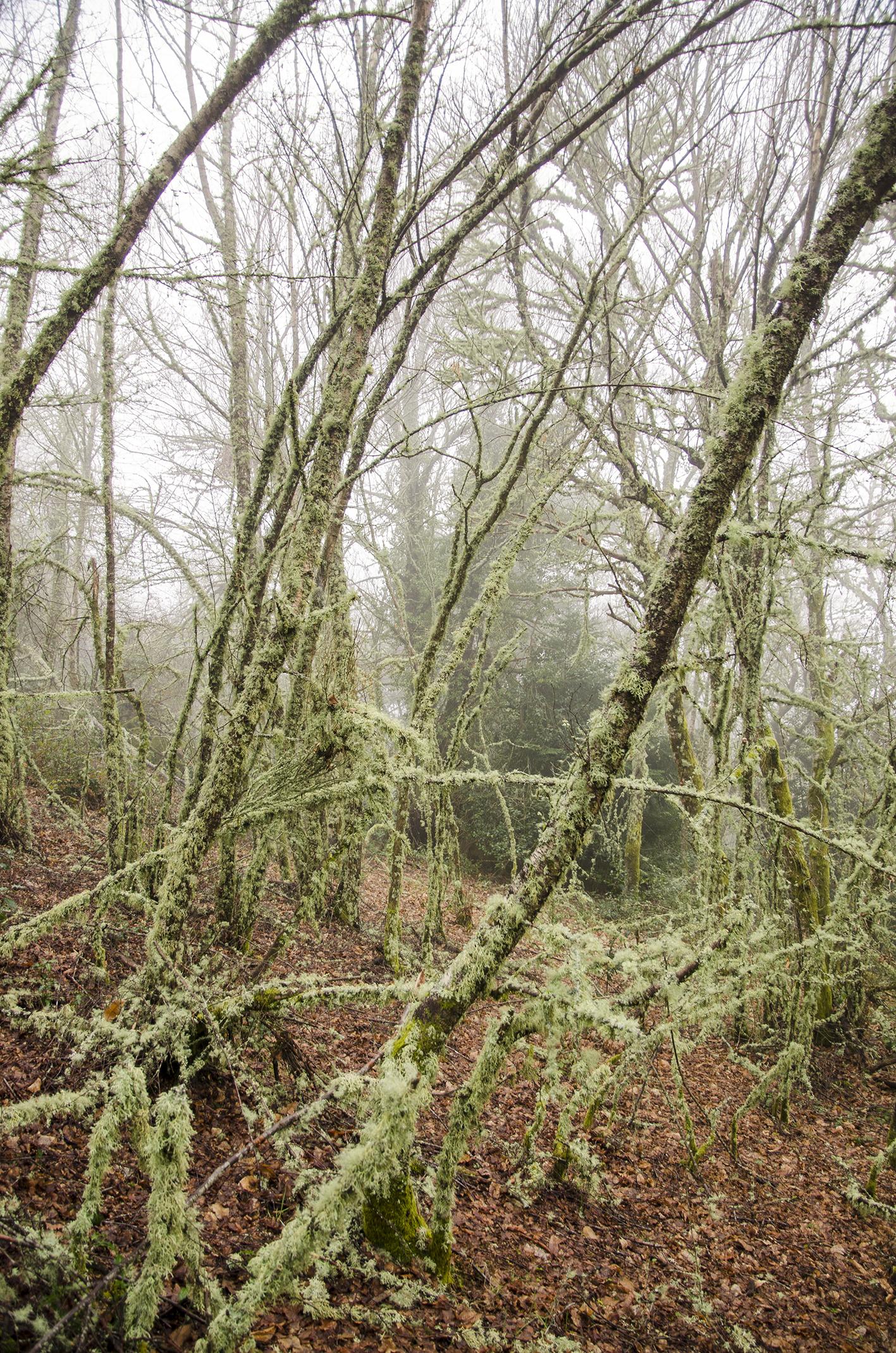 Bosque A Pobra do Brollón