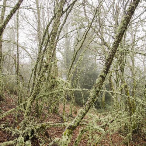 Bosque A Pobra de Brollón